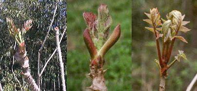 タラ の 木 増やし 方 挿し木(挿し芽)とは?挿し木で増やす方法と発根させるコツ